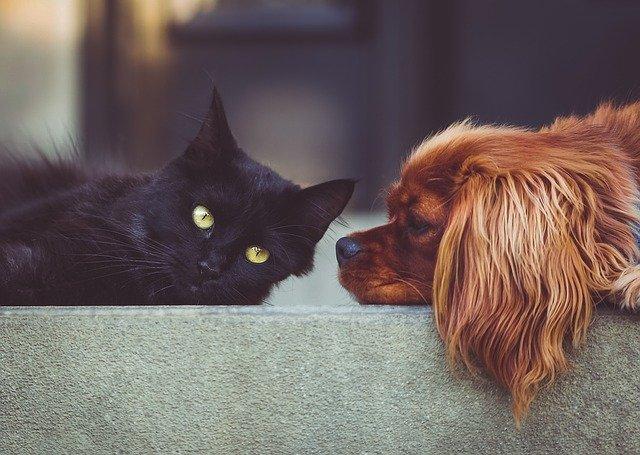 desintoxicar mascotas con carbón activado
