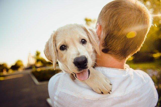 carbon activado para desintoxicar mascotas