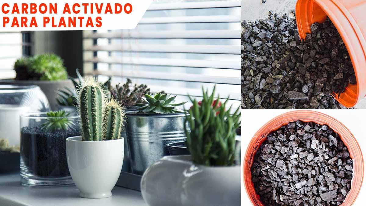carbon activado para plantas